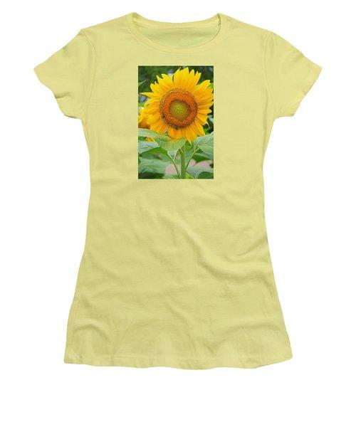 Sunflower Women's T-Shirt (Junior Cut) by Ronald Olivier