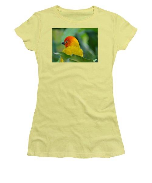 Through A Child's Eyes - Close Up Yellow And Orange Bird 2 Women's T-Shirt (Junior Cut) by Exploramum Exploramum