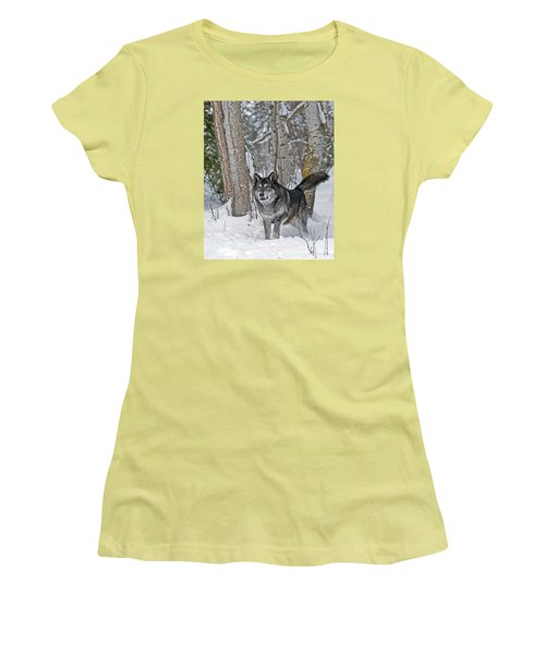 Wolf In Trees Women's T-Shirt (Athletic Fit)