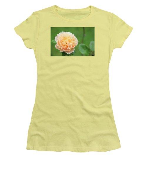 Yellow Rose In December Women's T-Shirt (Junior Cut) by Kelly Hazel