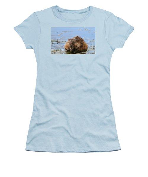 Beaver Portrait Women's T-Shirt (Junior Cut) by Dan Sproul