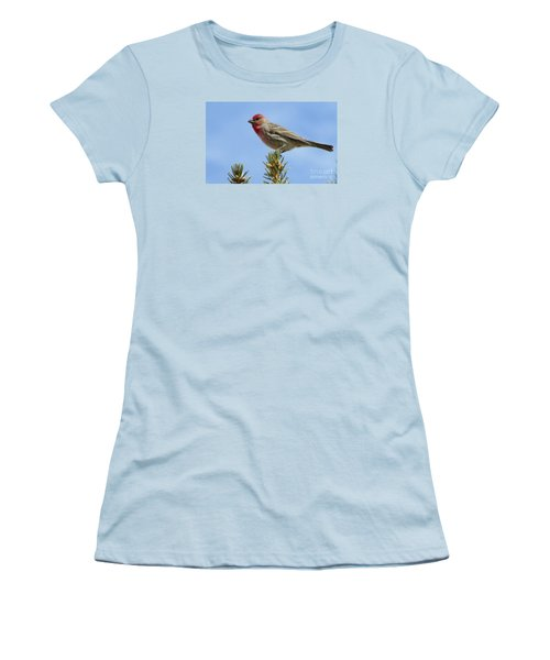 Women's T-Shirt (Junior Cut) featuring the photograph Cassin's Finch  by Janice Westerberg
