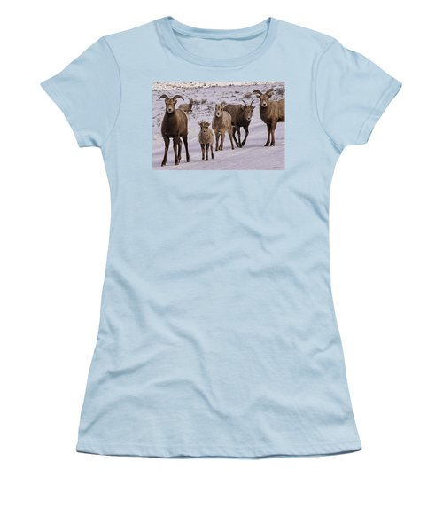 Women's T-Shirt (Junior Cut) featuring the photograph Not Too Sheepish by Priscilla Burgers