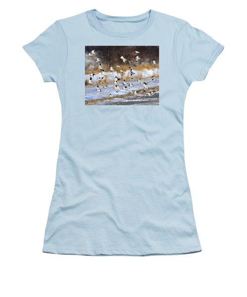 Snow Buntings Women's T-Shirt (Junior Cut) by Tony Beck