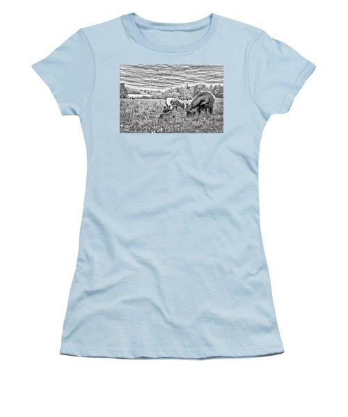 Women's T-Shirt (Junior Cut) featuring the digital art Belted Galloway Beef Cattle by Daniel Hebard