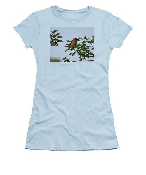 Cedar Waxwing Profile Women's T-Shirt (Athletic Fit)