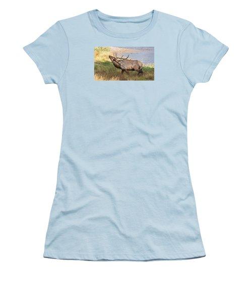 Women's T-Shirt (Junior Cut) featuring the photograph Seven Point Elk Bugling by Stephen  Johnson