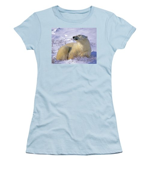 Sleepy Polar Bear Women's T-Shirt (Junior Cut) by Tony Beck