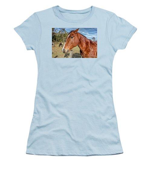 Wild Horse In Smoky Mountain National Park Women's T-Shirt (Junior Cut) by Peter Ciro