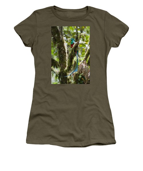 Women's T-Shirt featuring the photograph Resplendent Quetzal Male Costa Rica by Konrad Wothe