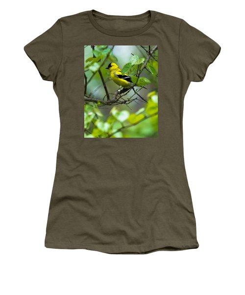American Goldfinch Women's T-Shirt