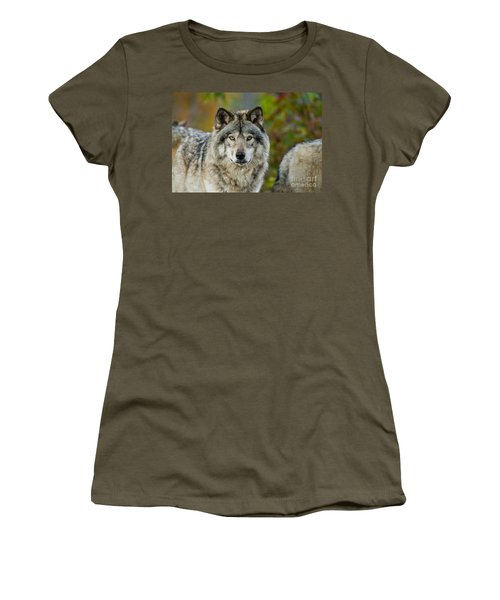 Timber Wolf Pictures Women's T-Shirt