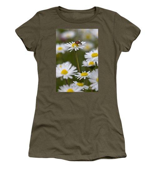 Asian Lady Beetle On A Daisy Women's T-Shirt
