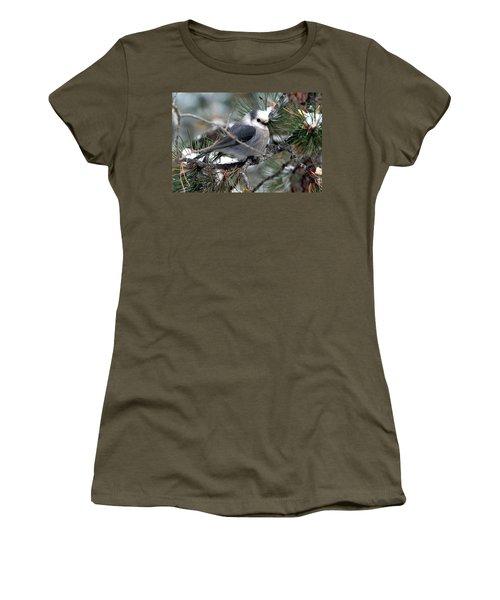 Gray Jay On A Snowy Pine Women's T-Shirt