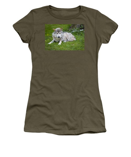 Women's T-Shirt (Junior Cut) featuring the photograph Mexican Gray Wolf by Sebastian Musial