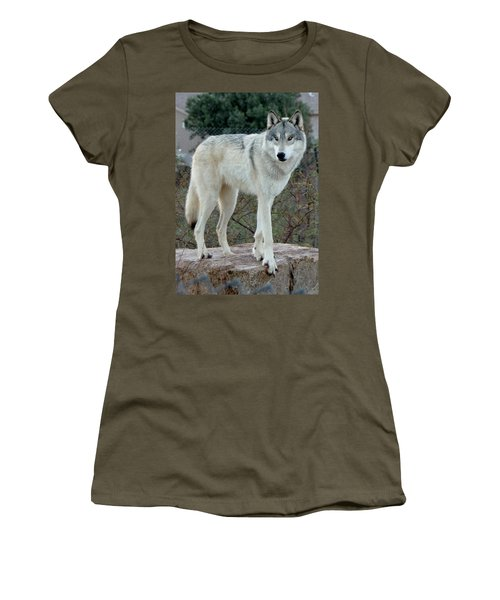 Out Of Africa Wolf  Women's T-Shirt