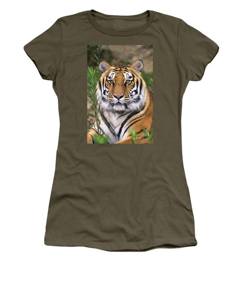 Siberian Tiger Staring Endangered Species Wildlife Rescue Women's T-Shirt (Athletic Fit)