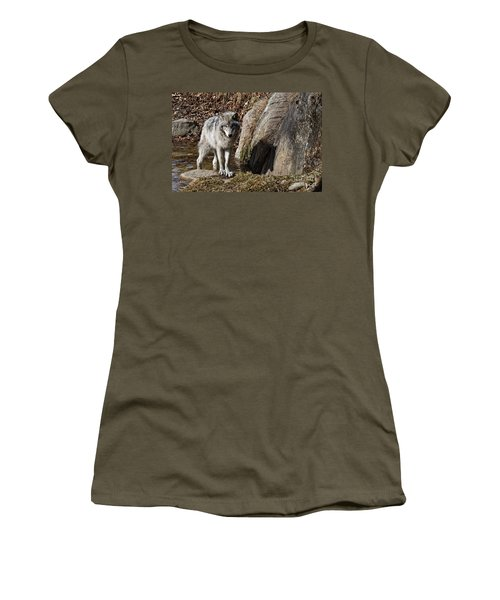 Women's T-Shirt (Junior Cut) featuring the photograph Timber Wolf In Pond by Wolves Only