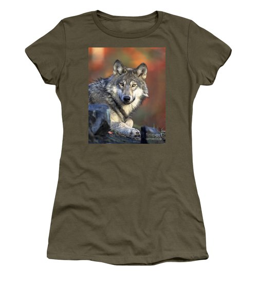 Women's T-Shirt (Junior Cut) featuring the photograph Wolf Predator Canidae Canis Lupus Hunter by Paul Fearn