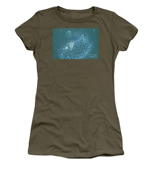 Lactobacillus Sp. Bacteria, Lm Women's T-Shirt