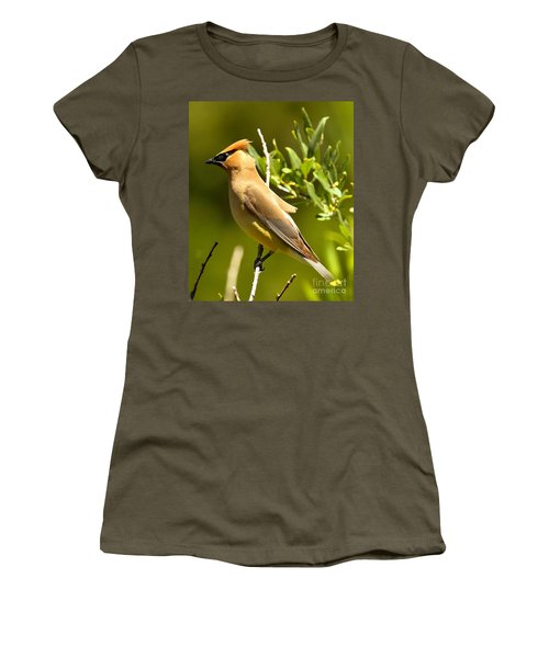Cedar Waxwing Closeup Women's T-Shirt (Athletic Fit)