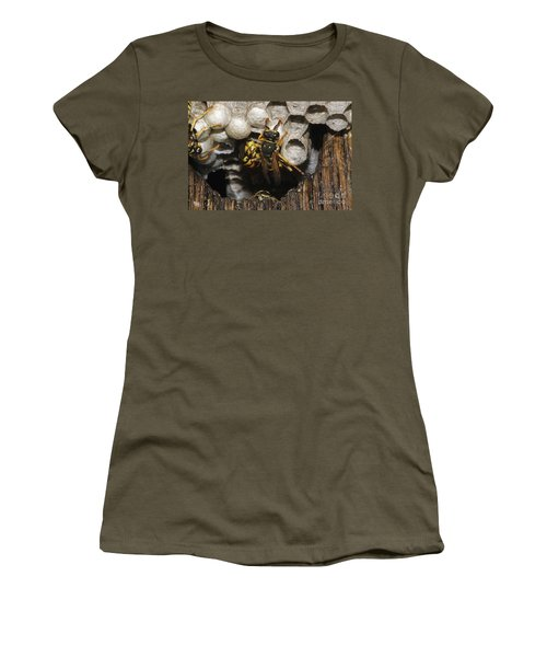 Common Wasp Vespula Vulgaris Women's T-Shirt