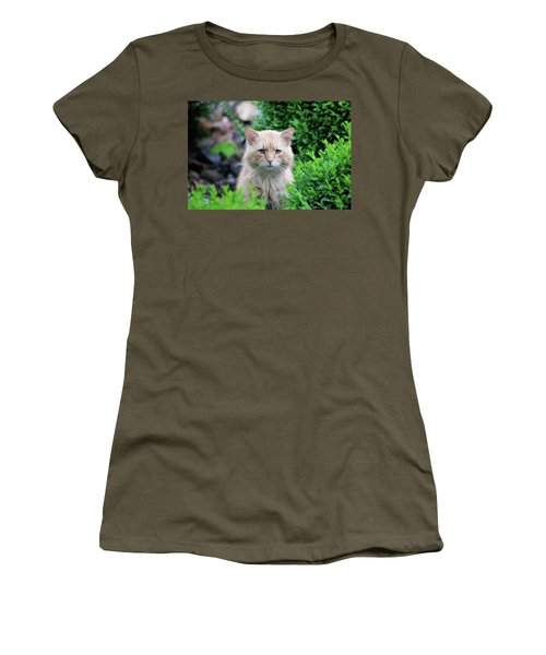 Women's T-Shirt (Athletic Fit) featuring the photograph Beautiful Kitty by Trina Ansel