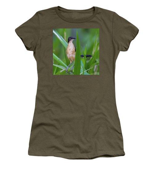 Black-capped Donacobius Women's T-Shirt (Athletic Fit)