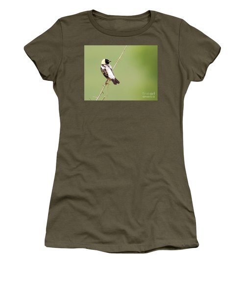 Bobolink Looking At You Women's T-Shirt