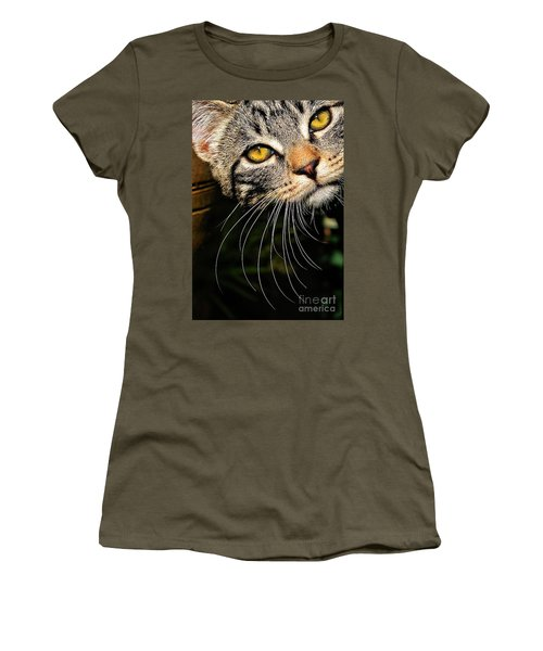 Curious Kitten Women's T-Shirt