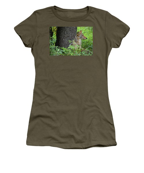 Early Morning Coyote In Maine Women's T-Shirt