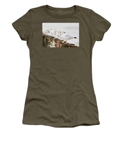 European Herring Gulls In A Row  Women's T-Shirt