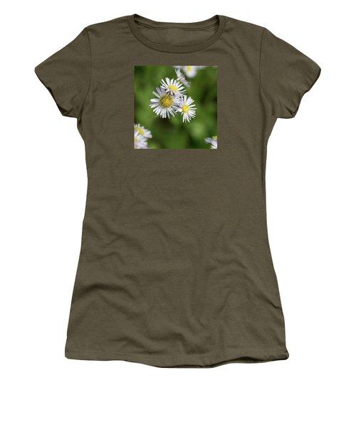 Fleabane, Erigeron Pulchellus - Women's T-Shirt