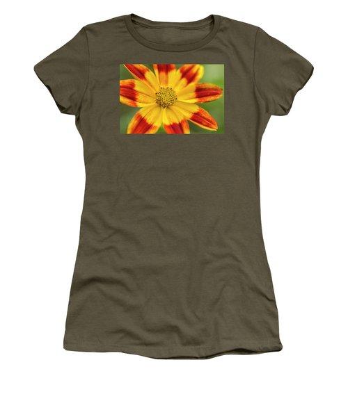 Gaillardia Aristata Women's T-Shirt