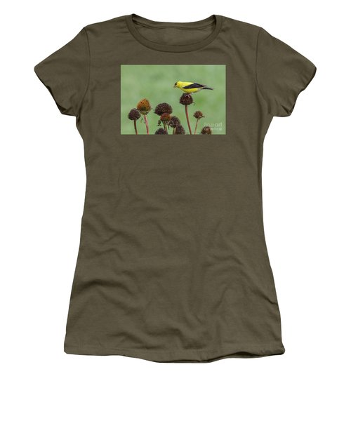 Goldfinch And Coneflowers Women's T-Shirt (Athletic Fit)