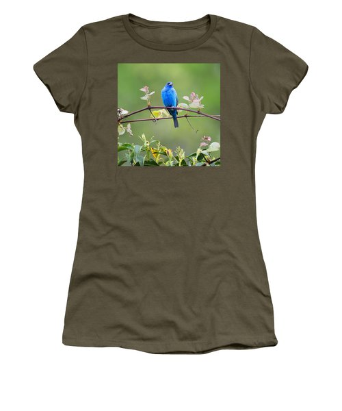 Indigo Bunting Perched Square Women's T-Shirt (Junior Cut) by Bill Wakeley