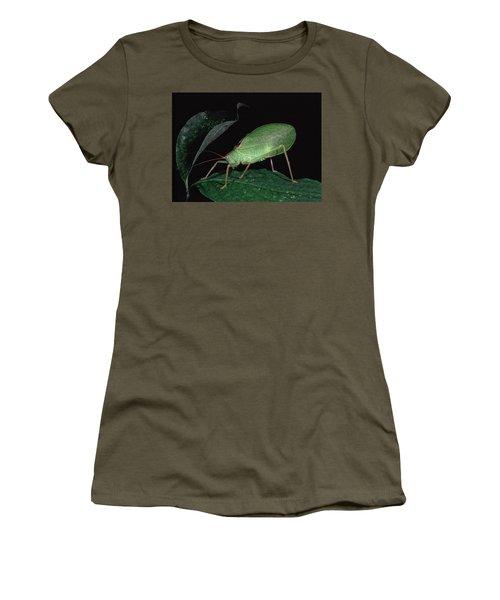 Katydid At Night Women's T-Shirt