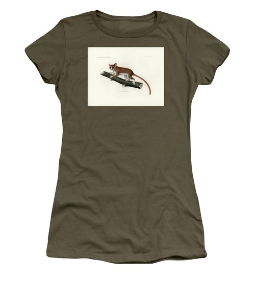 Pygmy Mouse Lemur Women's T-Shirt (Junior Cut) by Hugo Troschel