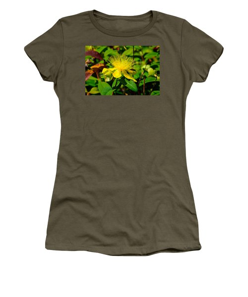 Saint John's Wort Blossom Women's T-Shirt