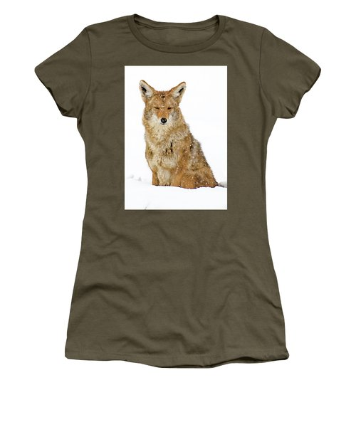 Snowy Coyote Women's T-Shirt