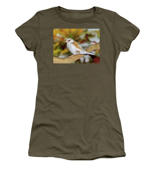 Women's T-Shirt (Athletic Fit) featuring the photograph Society Finch At The Key West Butterfly And Nature Conservatory by Bob Slitzan