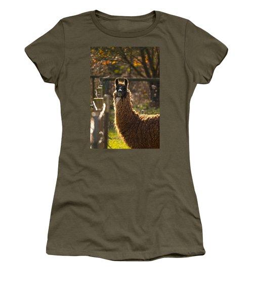 Staring Llama Women's T-Shirt