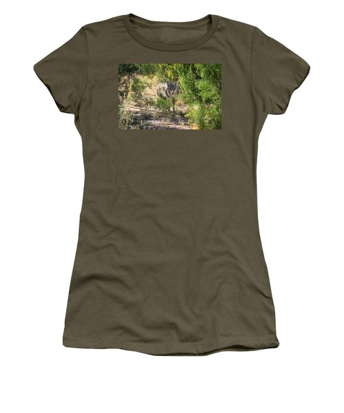 Cautious Coyote Women's T-Shirt