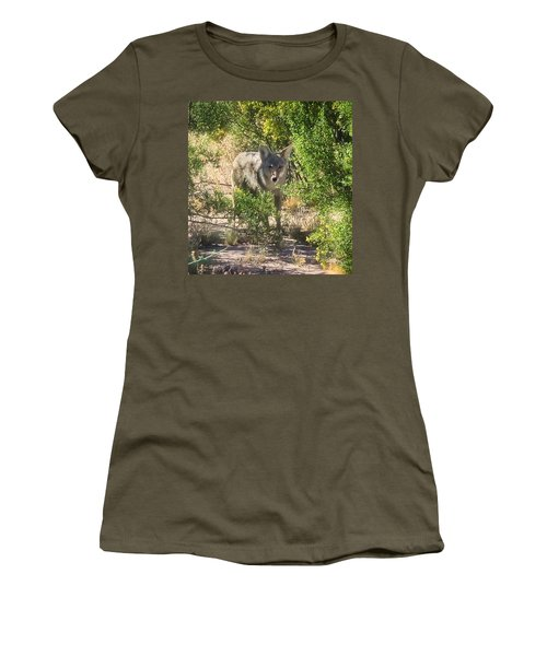 Cautious Coyote Women's T-Shirt