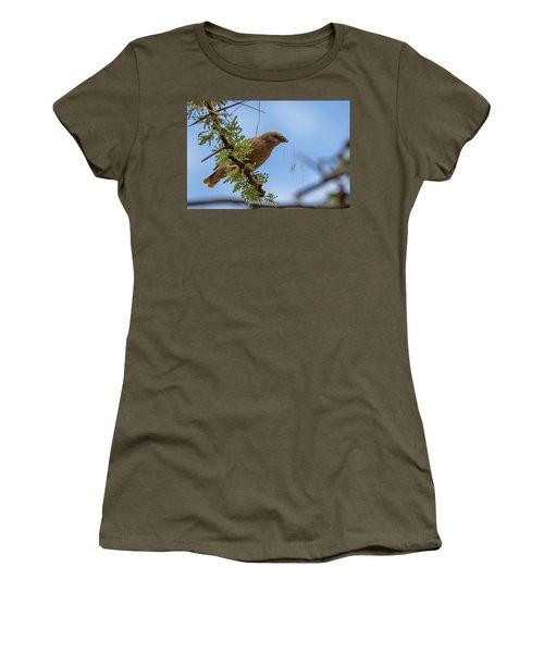 Gray-headed Social Weaver Women's T-Shirt