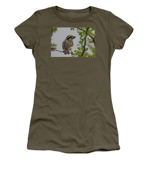 Red-fronted Barbet Women's T-Shirt