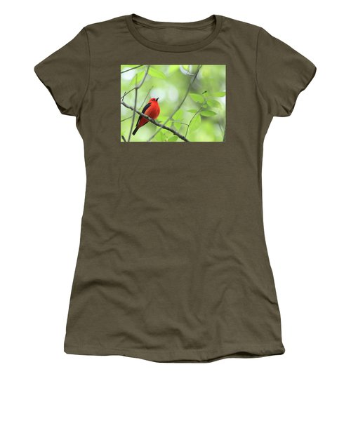 Scarlet Tanager Women's T-Shirt