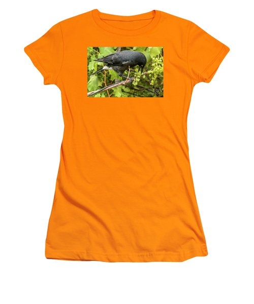 Currawong On A Vine Women's T-Shirt (Athletic Fit)