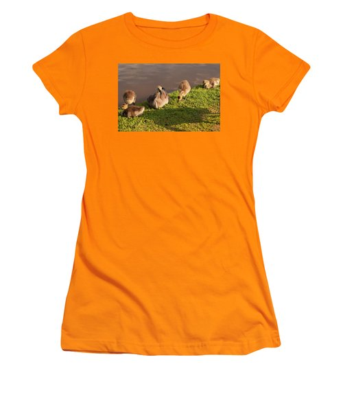 Women's T-Shirt (Junior Cut) featuring the photograph Goslings Basking In The Sunset by Chris Flees