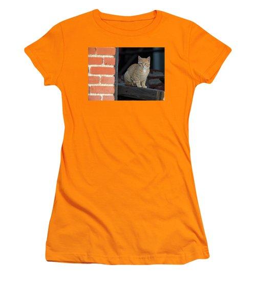 Street Cat Women's T-Shirt (Junior Cut) by Scott Warner